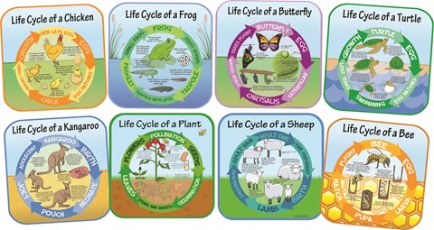 Life Cycles - Set of 8