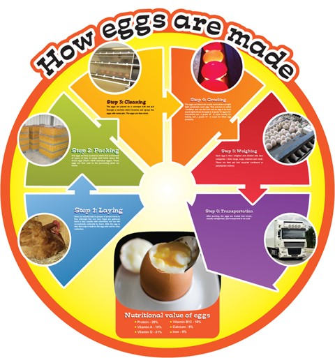 Food Cycles - Eggs